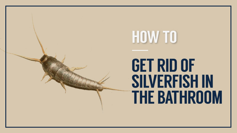 How-To-Get-Rid-Of-Silverfish-In-The-Bathroom